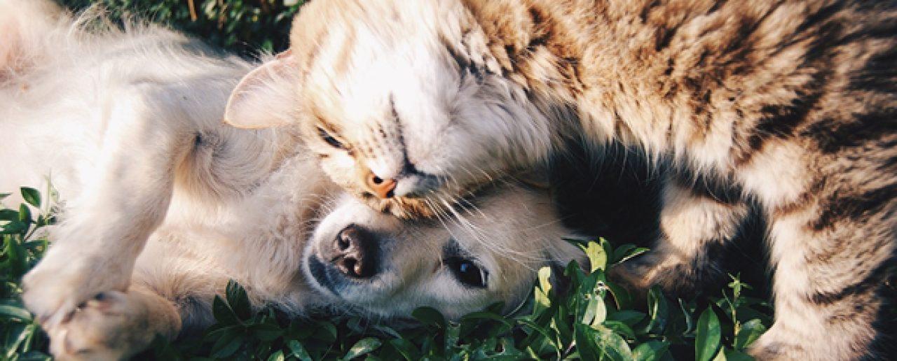 Cani e gatti obesi: il decalogo della AIDAA