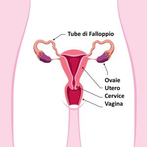 Organi Genitali Femminili